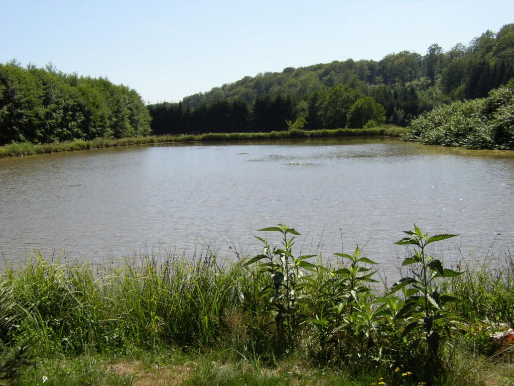 Naissance et adolescence de mon étang P1010010