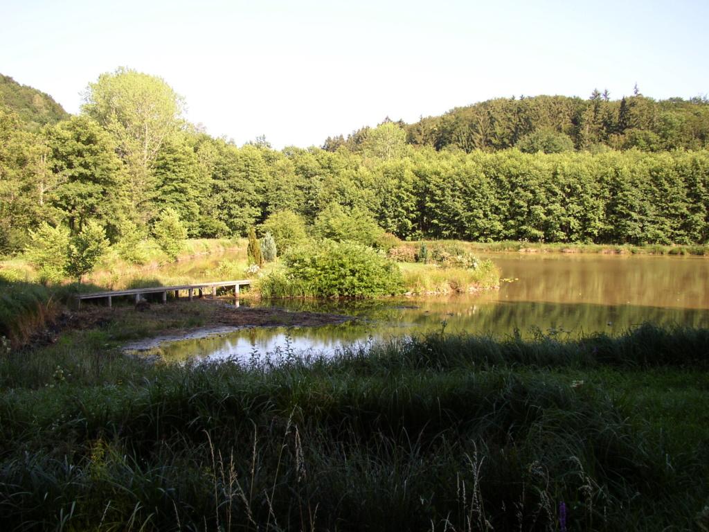 Naissance et adolescence de mon étang P1010013