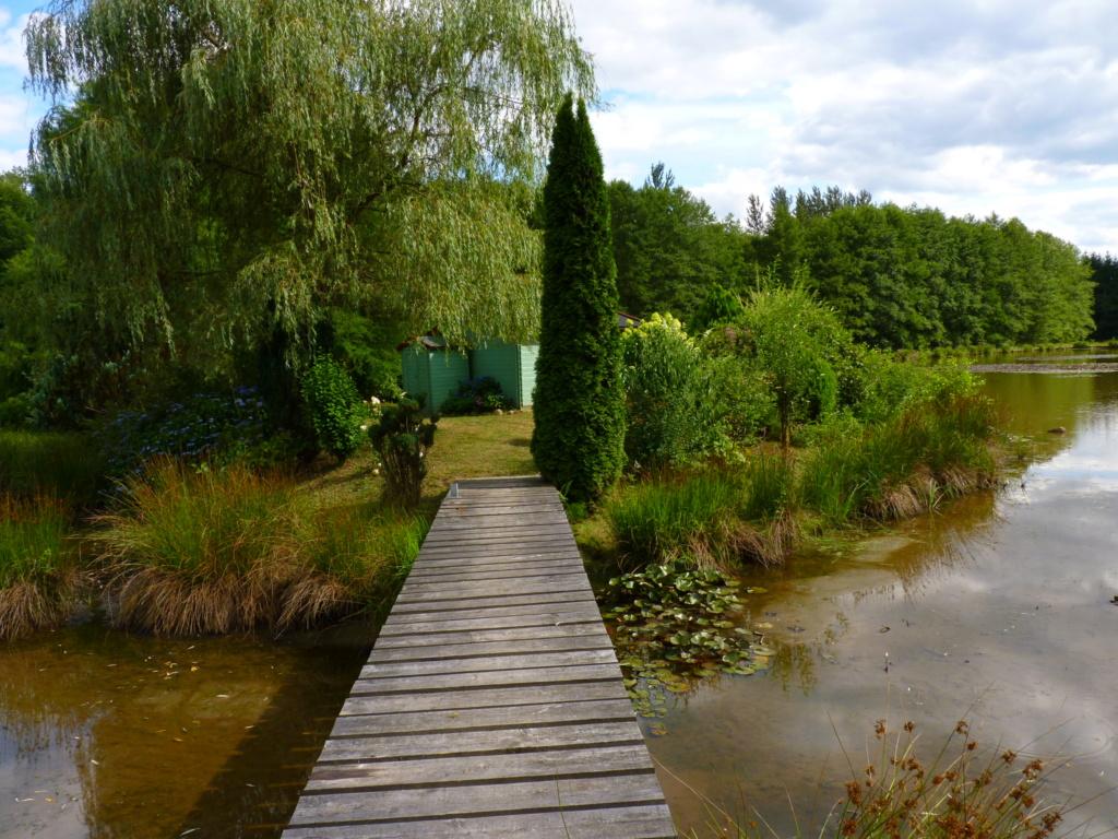 Naissance et adolescence de mon étang P1030710
