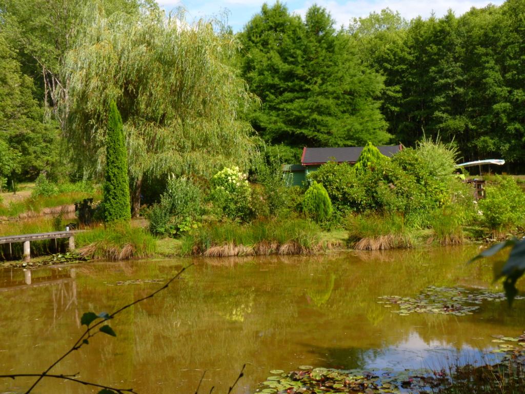 Naissance et adolescence de mon étang P1030711