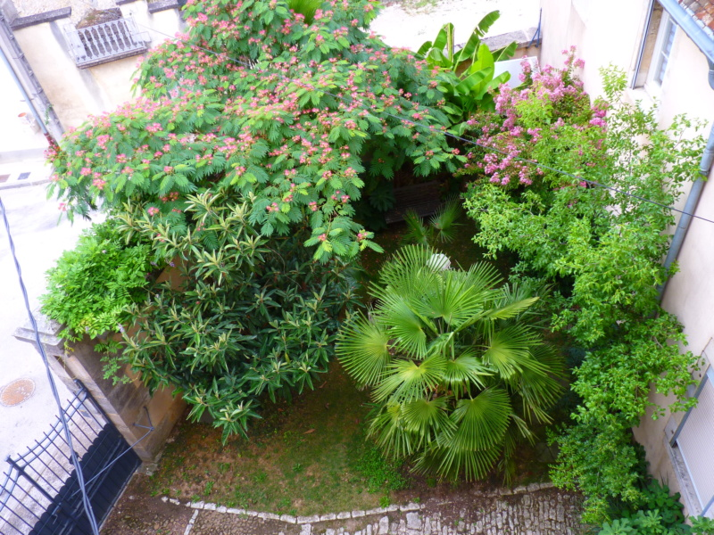 Micro-jardin : mon patio andalou P1050411