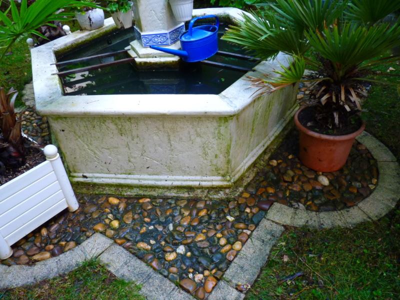 Micro-jardin : mon patio andalou P1050412