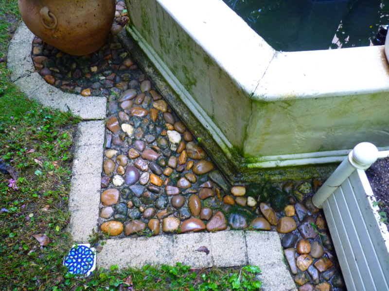 Micro-jardin : mon patio andalou P1050415