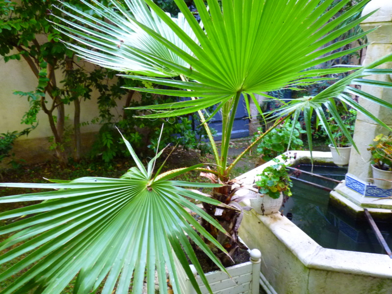 Micro-jardin : mon patio andalou P1050418
