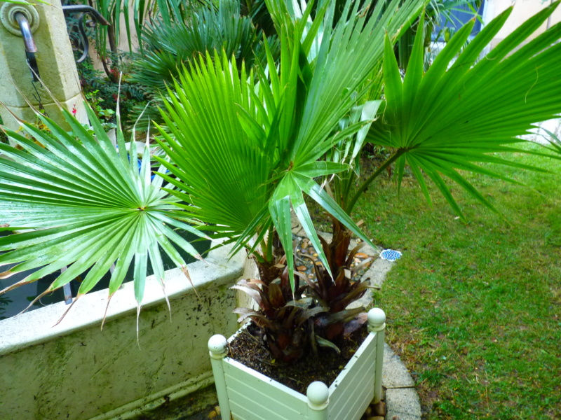 Micro-jardin : mon patio andalou P1050419
