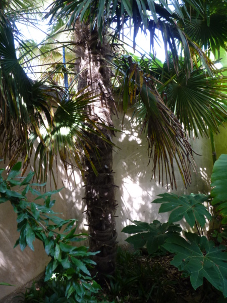 Micro-jardin : mon patio andalou P1050420