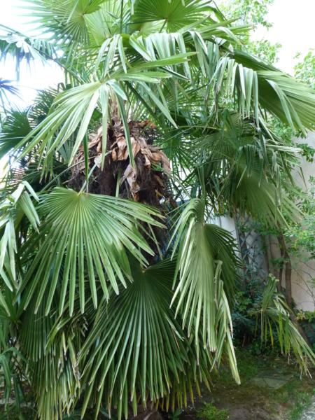 Micro-jardin : mon patio andalou P1050421