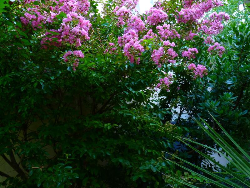 Micro-jardin : mon patio andalou P1050423