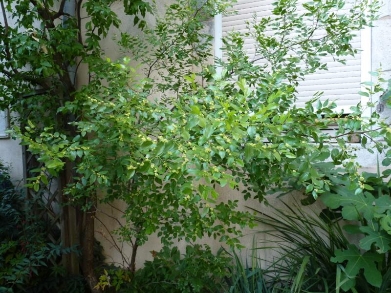 Micro-jardin : mon patio andalou P1050424