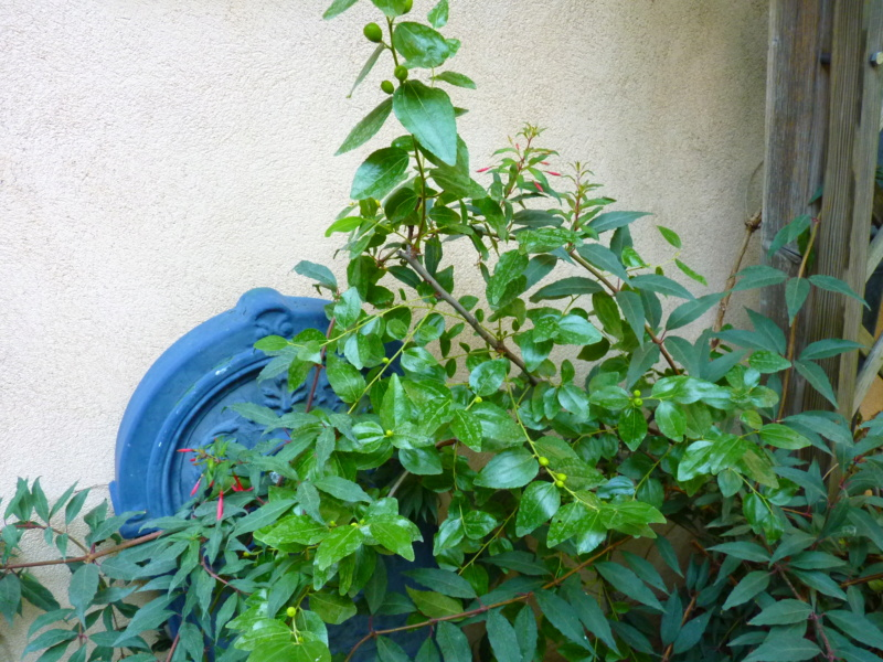 Micro-jardin : mon patio andalou P1050425