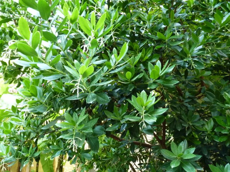 Micro-jardin : mon patio andalou - Page 2 P1050428