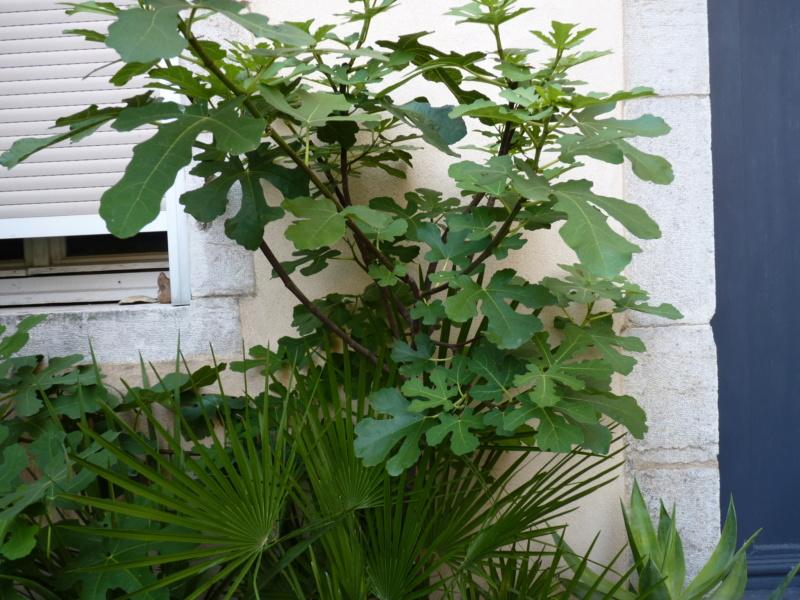 Micro-jardin : mon patio andalou - Page 2 P1050432