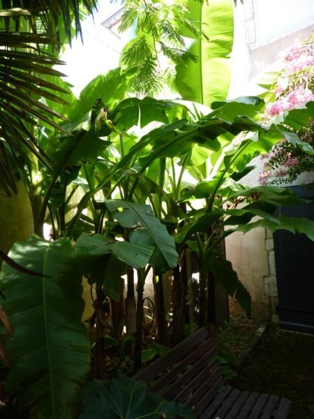 Micro-jardin : mon patio andalou - Page 2 P1050437