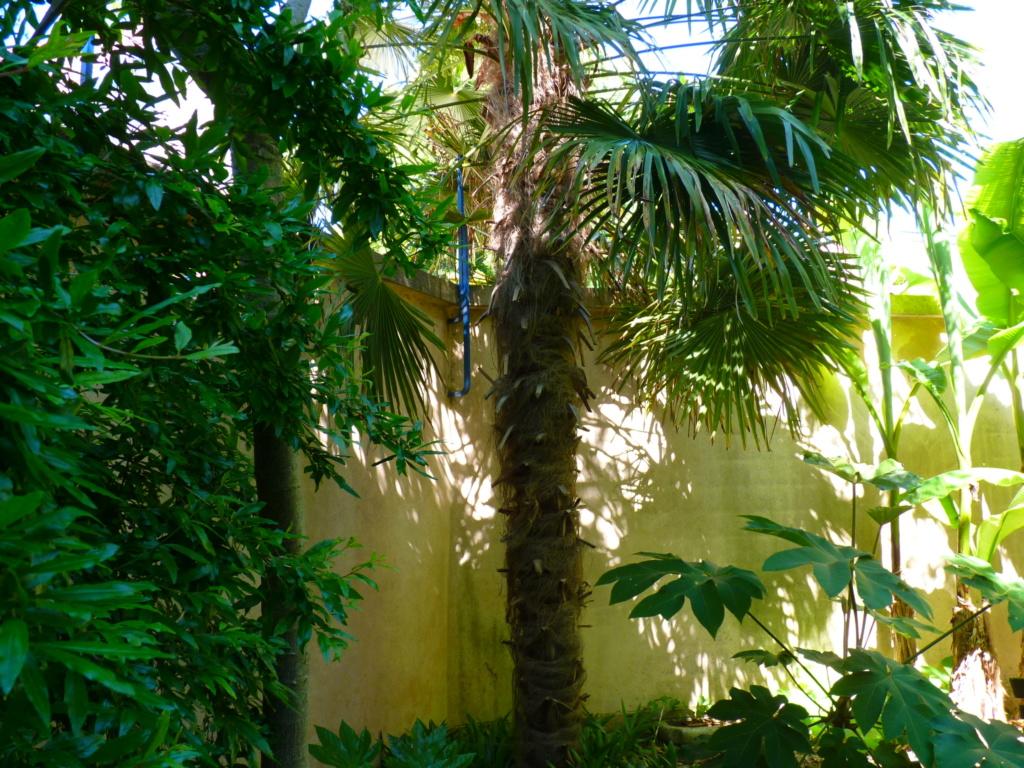 Micro-jardin : mon patio andalou - Page 2 P1050614