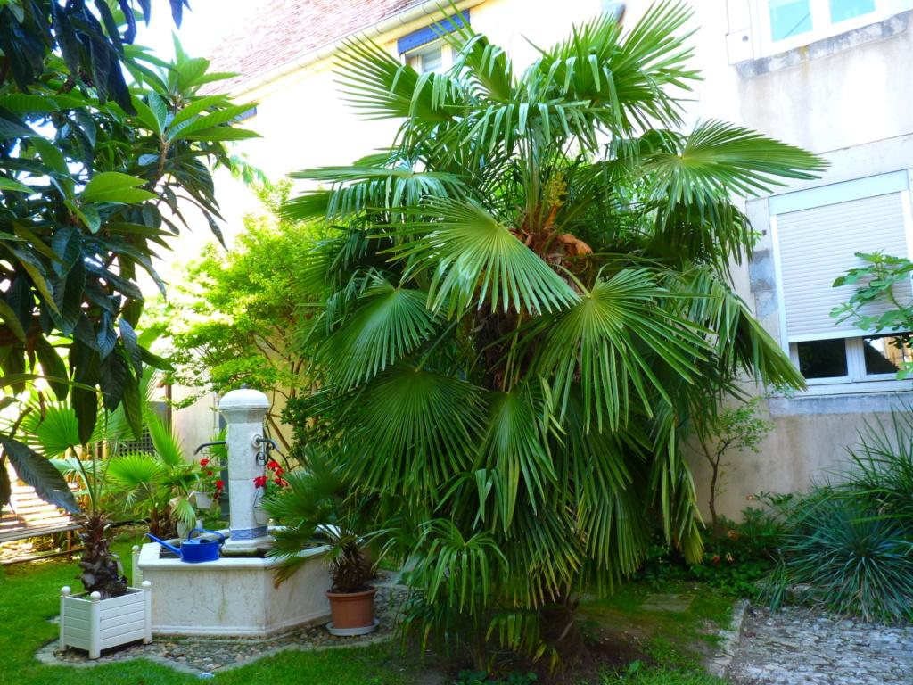 Micro-jardin : mon patio andalou - Page 2 P1050616
