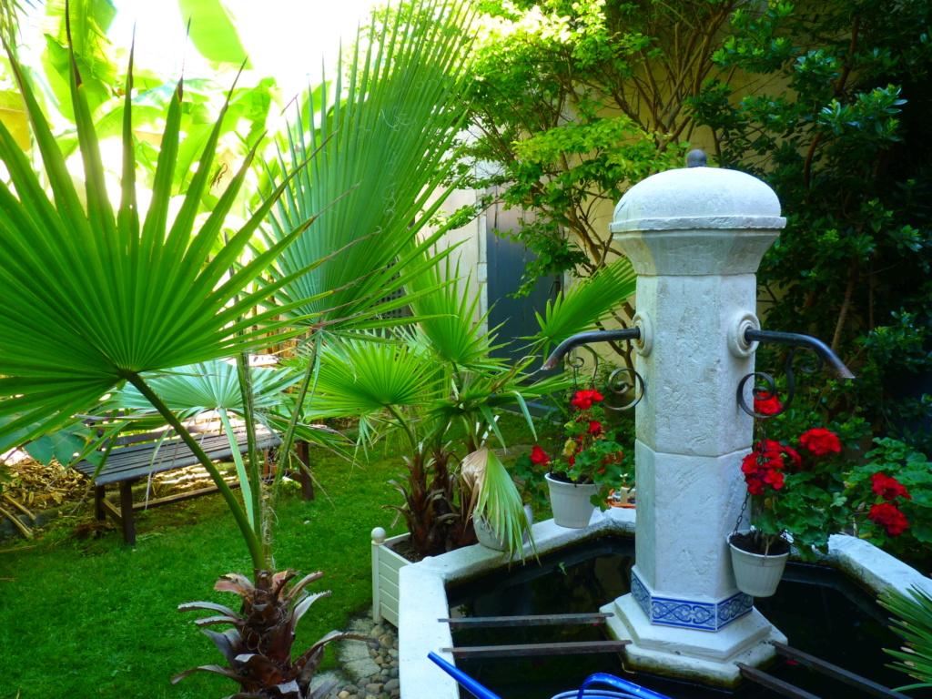 Micro-jardin : mon patio andalou - Page 2 P1050618