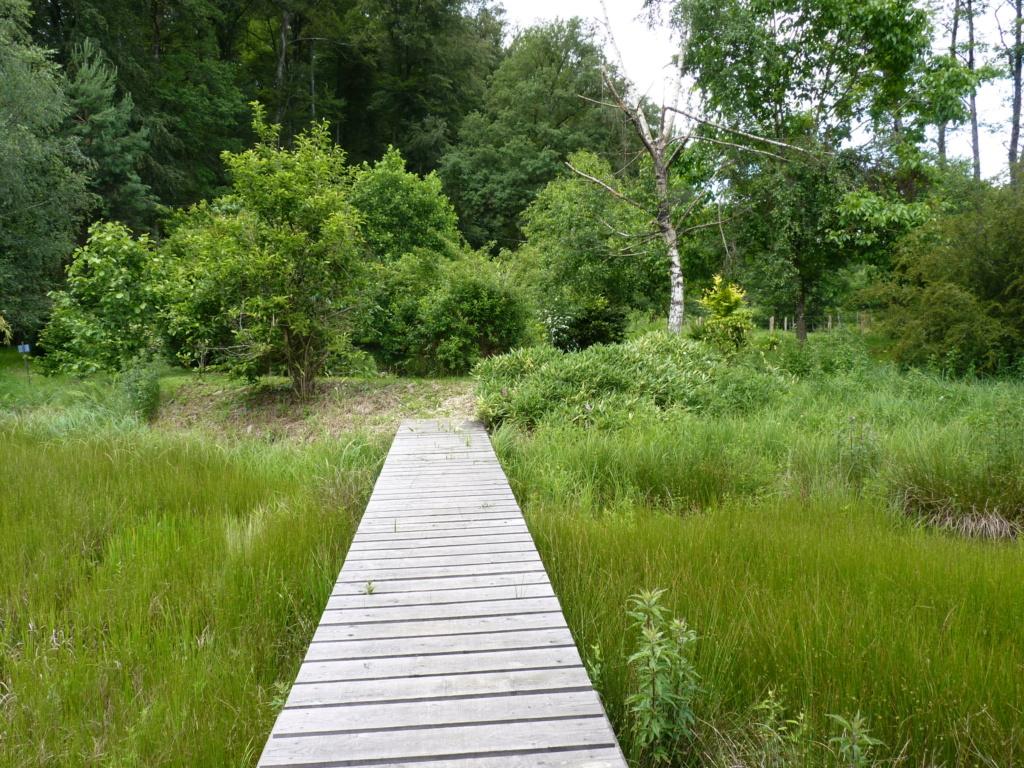 Naissance et adolescence de mon étang P1050713