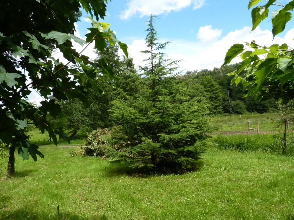 Naissance et adolescence de mon étang P1050810