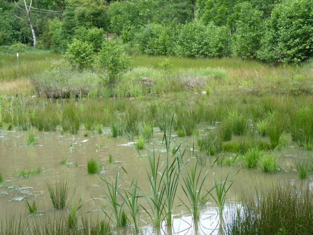 Naissance et adolescence de mon étang P1050813