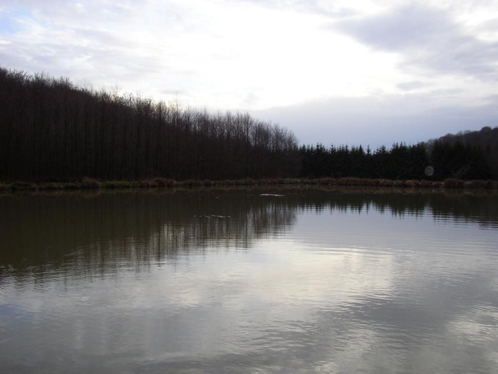 Naissance et adolescence de mon étang P4140010