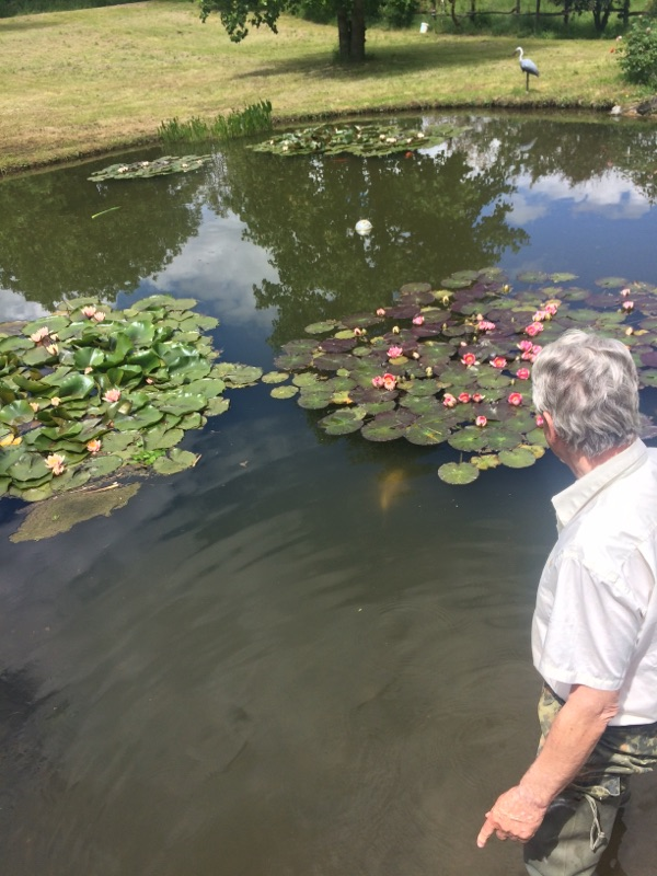 Mon bassin à Koï - Page 19 09b86310