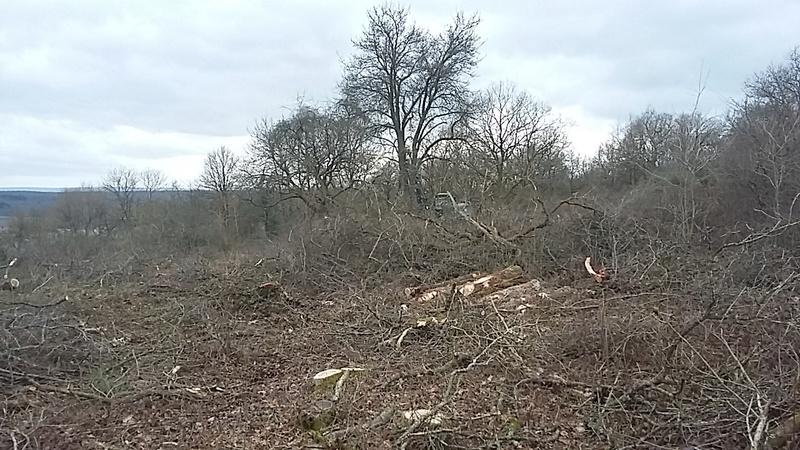 CR travaux d'aménagement et d'amélioration d'une chasse grand gibier - Page 3 20170243