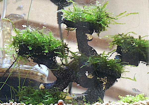 6 BACS ESCALIER dont 4 avec crevettes et 2 avec plantes - Page 3 Dsc05715