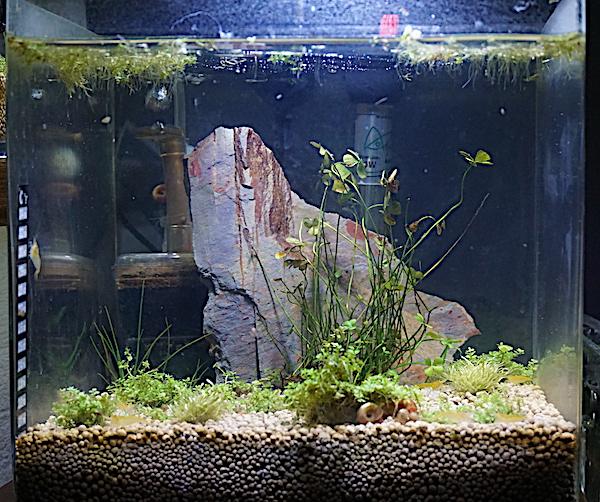 6 BACS ESCALIER dont 4 avec crevettes et 2 avec plantes - Page 3 Dsc05813
