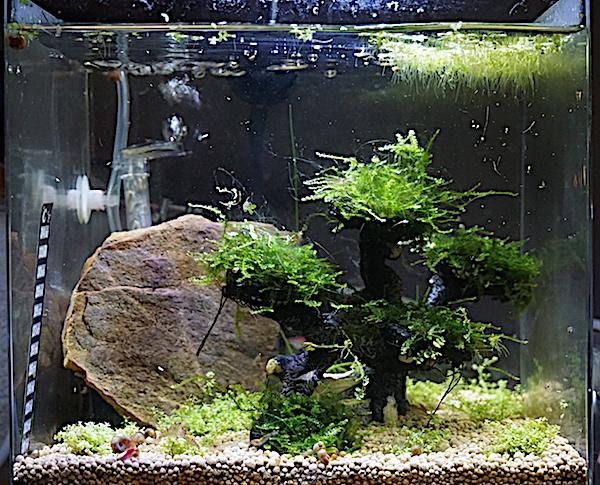 6 BACS ESCALIER dont 4 avec crevettes et 2 avec plantes - Page 3 Dsc05814