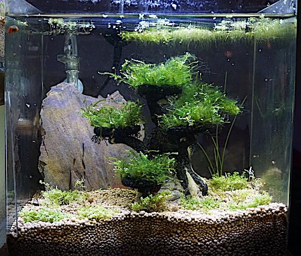 6 BACS ESCALIER dont 4 avec crevettes et 2 avec plantes - Page 3 Dsc05815