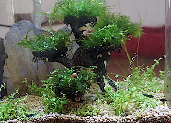 6 BACS ESCALIER dont 4 avec crevettes et 2 avec plantes - Page 3 Dsc05823