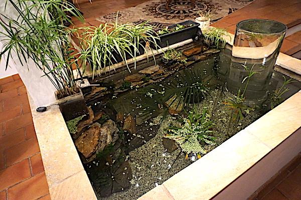 Bassin intérieur avec son observatoire  - Page 7 Dsc06410