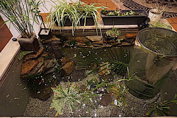 Bassin intérieur avec son observatoire  - Page 7 Dsc06411