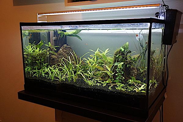 Mon 46L avec des crevettes blacks et Endler  - Page 3 Dsc06718