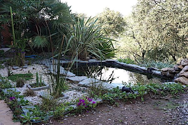Bassin extérieur avec voiles de chine - Page 8 Dsc06811
