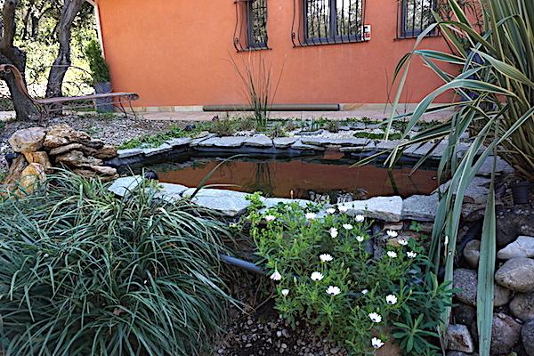 Bassin extérieur avec voiles de chine - Page 8 Dsc06814