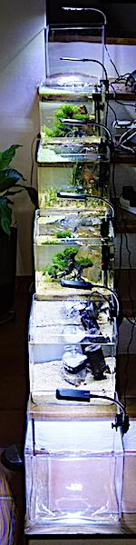6 BACS ESCALIER dont 4 avec crevettes et 2 avec plantes - Page 3 Dsc06910