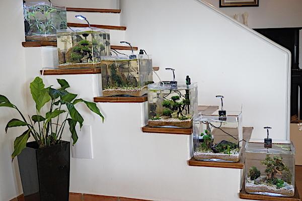 6 BACS ESCALIER dont 4 avec crevettes et 2 avec plantes - Page 4 Dsc06927