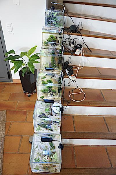 6 BACS ESCALIER dont 4 avec crevettes et 2 avec plantes - Page 4 Dsc06928