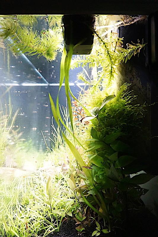 Aquarium Elégance Inox avec guppy et red cherry - Page 5 Dsc07518