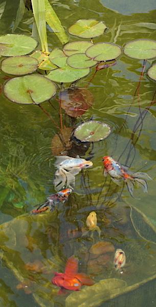 Bassin extérieur avec voiles de chine - Page 9 Dsc08311