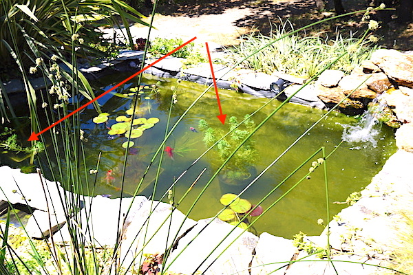 Bassin extérieur avec voiles de chine - Page 9 Dsc08610