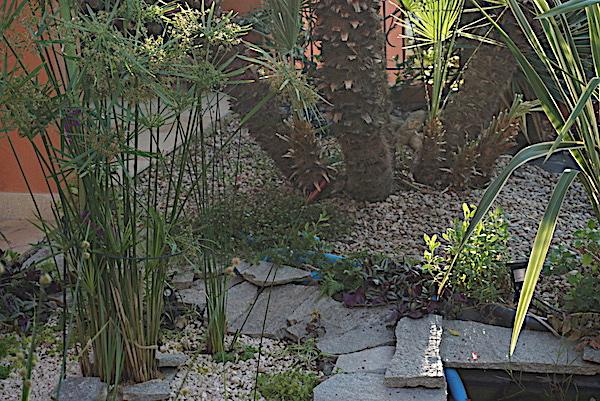 Bassin extérieur avec voiles de chine - Page 10 Dsc08712