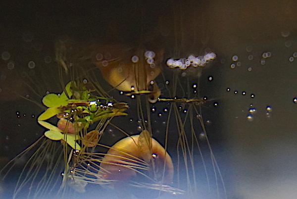 Mon 46L avec des crevettes blacks et Endler  - Page 3 Dsc08922