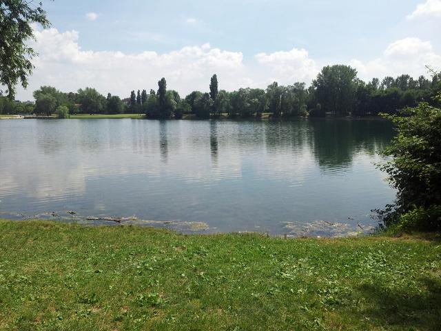 Domenica 4/6 Milano parco delle cave - Pagina 2 20170624