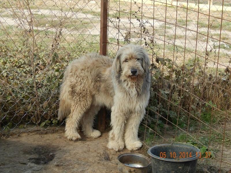 FLASH, mâle, croisé, taille moyenne à grande (Pascani) - adopté par emi et joee (Belgique) - Page 18 10007310