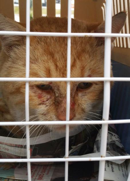 Urgence Turquie / 20 chatons beaux, très calins, de 3 mois à 2 ans max cherchent adoption et soins ! 111