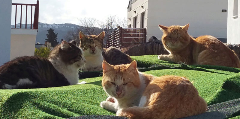 Urgence Turquie / 20 chatons beaux, très calins, de 3 mois à 2 ans max cherchent adoption et soins ! Bb10