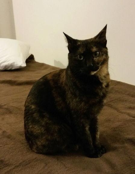 Urgence Turquie / 20 chatons beaux, très calins, de 3 mois à 2 ans max cherchent adoption et soins ! C10