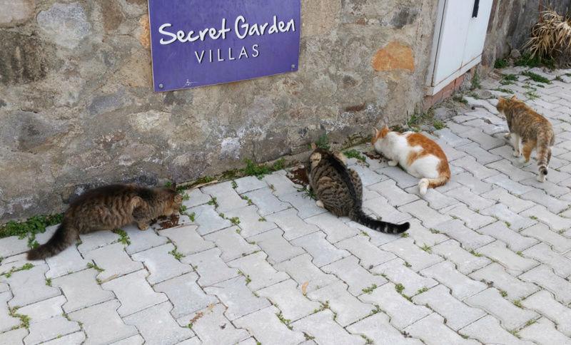 Urgence Turquie / 20 chatons beaux, très calins, de 3 mois à 2 ans max cherchent adoption et soins ! F10
